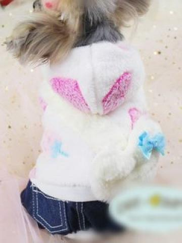 Pet Hooded Overall